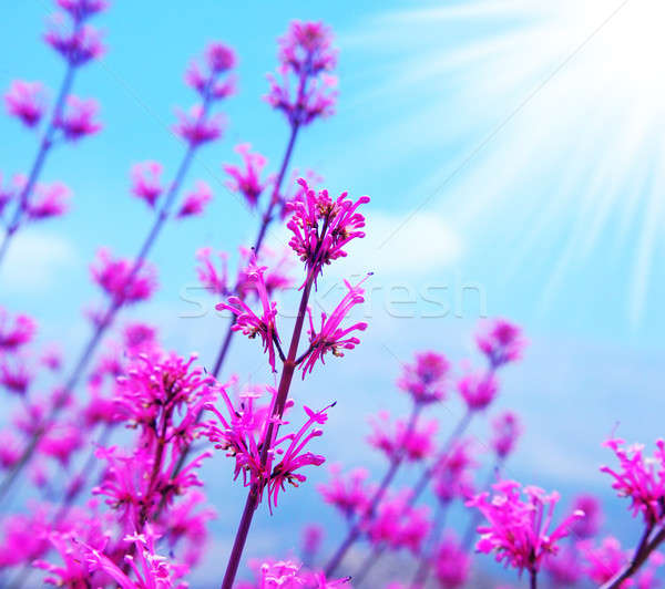 Stock photo: Spring flower background