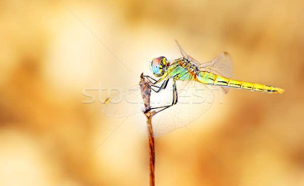 Portre yusufçuk güzel renkli vücut Stok fotoğraf © Anna_Om