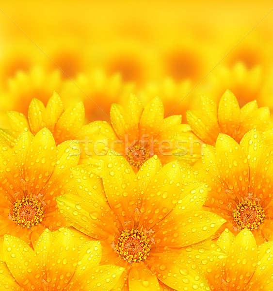 Stock photo: Fresh yellow flower background