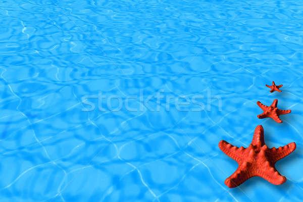 água vermelho starfish imagem férias verão Foto stock © Anna_Om