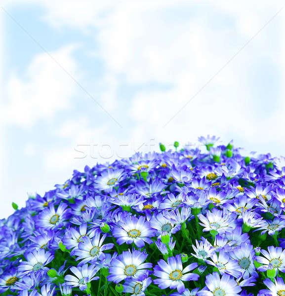 フローラル デイジーチェーン 国境 新鮮な 春 青 ストックフォト © Anna_Om