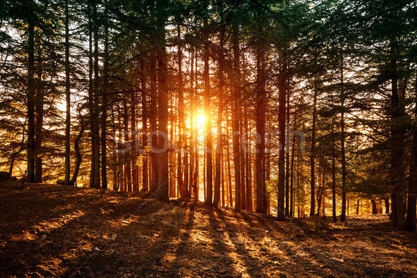 Beautiful forest landscape Stock photo © Anna_Om