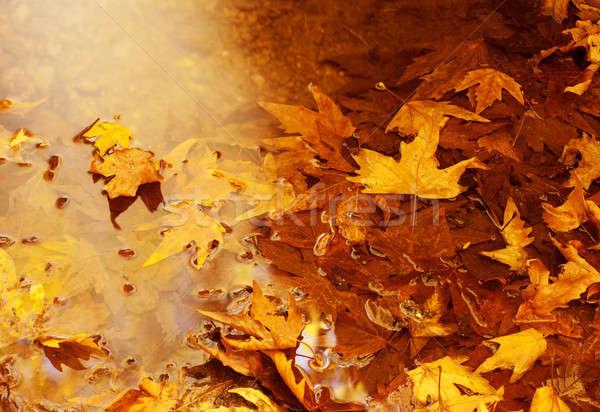 Schwimmend Herbstlaub Foto golden natürlichen Hintergrund Stock foto © Anna_Om