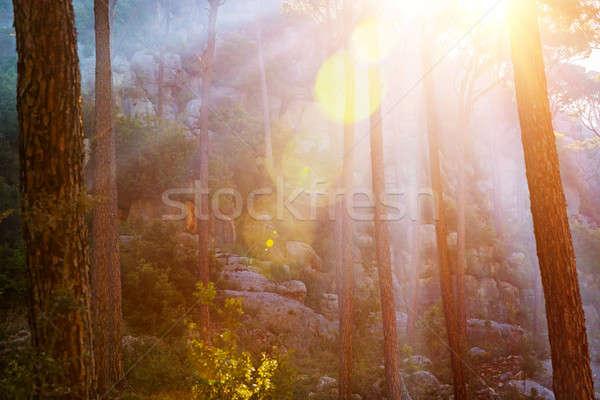Forest in sunset light Stock photo © Anna_Om