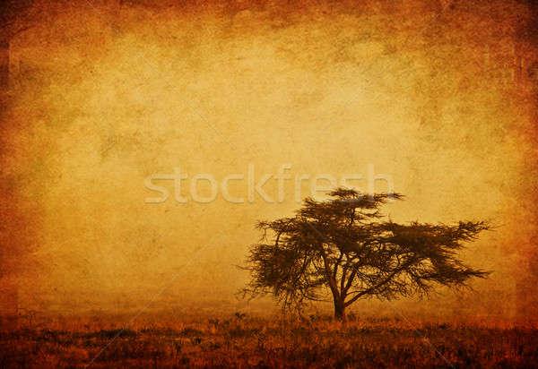 Solitaire arbre brouillard grunge nature saison d'automne Photo stock © Anna_Om
