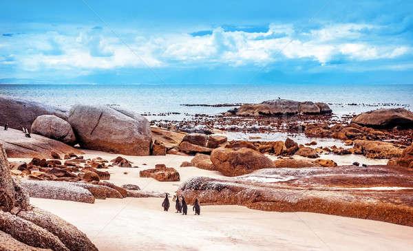 Sauvage afrique du sud colonie marche plage ville Photo stock © Anna_Om