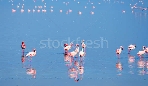 Flamingó Afrika Kenya tó víz tájkép Stock fotó © Anna_Om
