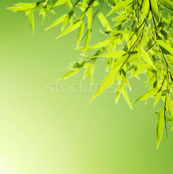 Foto stock: Fresco · bambu · folhas · fronteira · verde · planta
