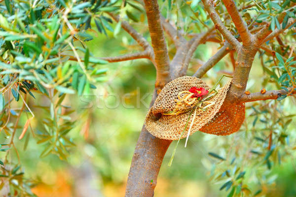 Relajación agrícola trabajo sombrero árbol aceitunas Foto stock © Anna_Om