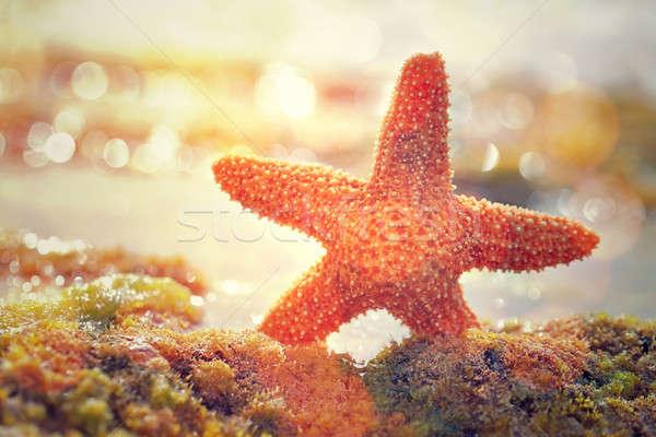 Belle starfish jaune coucher du soleil lumière beauté Photo stock © Anna_Om
