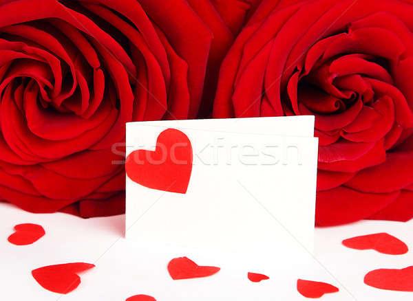 Boş kart güller tebrik kartı kırmızı kalp yalıtılmış Stok fotoğraf © Anna_Om