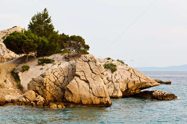Pine Tree on the Rocky Beach in Brela, Croatia Stock photo © anshar