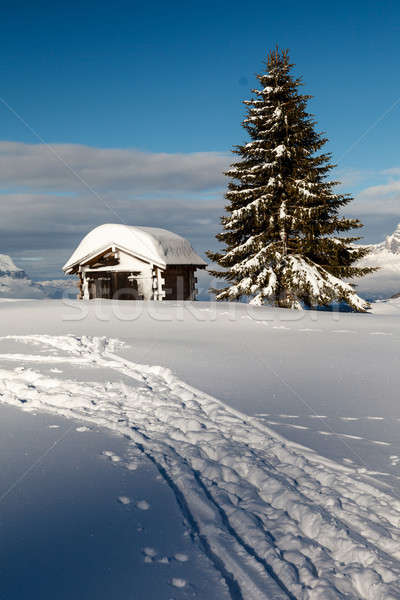 Small Hut and Fir Tree on the Top of the Mountain in French Alps Stock photo © anshar