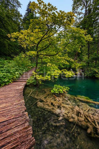 Parc Croatie forêt paysage été vert Photo stock © anshar