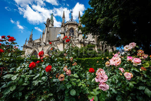 Notre Dame de Paris Cathedral with Red and White Roses in Foregr Stock photo © anshar
