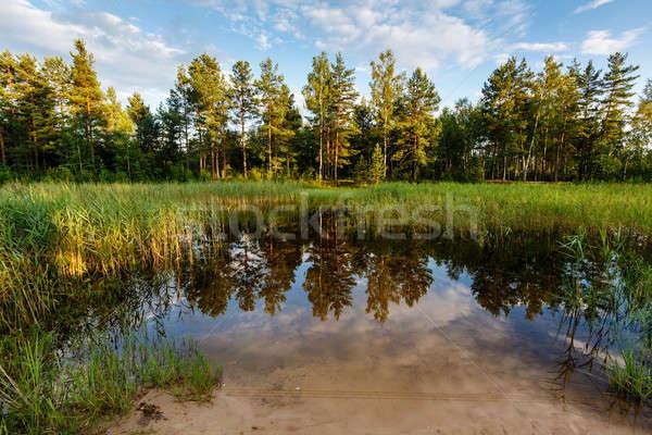 Lago floresta árvores reflexão Moscou Rússia Foto stock © anshar