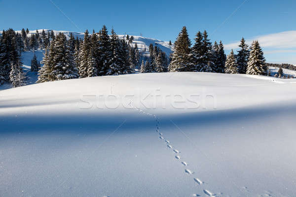Almost Untouched Powder Snow Landscape, Ski Resort Megeve, Frenc Stock photo © anshar