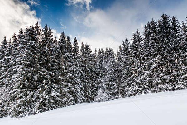 французский Альпы Франция лес природы Сток-фото © anshar