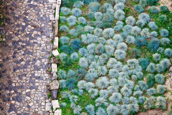 Cobbled road and green plants pattern in San Giorgio Castle in L Stock photo © anshar