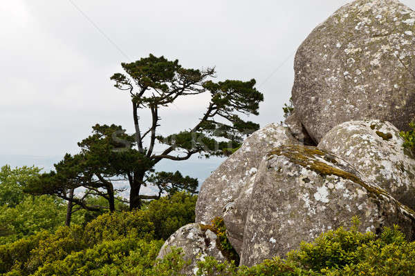 Rocks and the Tree in Moorish Castle near Lisbon, Portugal Stock photo © anshar