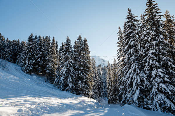 Ski Slope and Beautiful  Landscape in Megeve, French Alps, Franc Stock photo © anshar