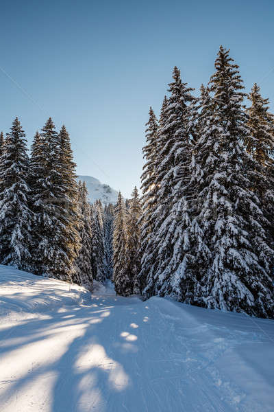 Ensoleillée français alpes France arbre Photo stock © anshar