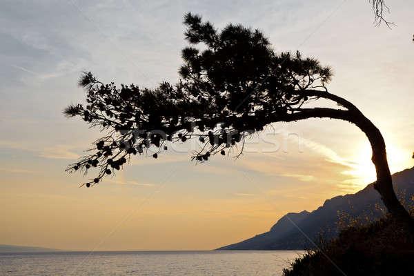 сосна закат Хорватия воды солнце природы Сток-фото © anshar