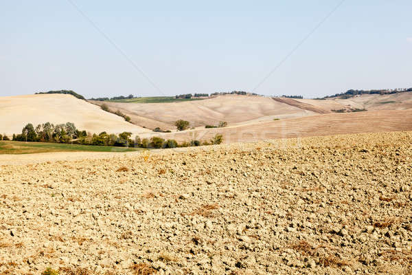 Tuscan Country near Montalcino, Tuscany, Italy Stock photo © anshar