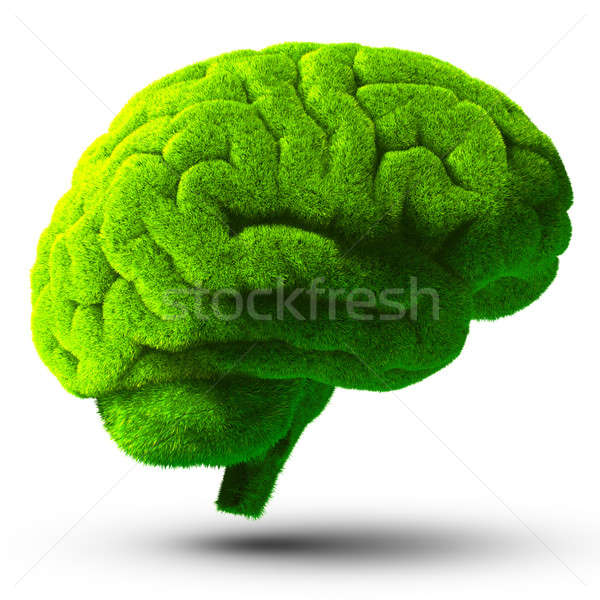 Verde cervello cervello umano coperto erba verde metafora Foto d'archivio © Antartis