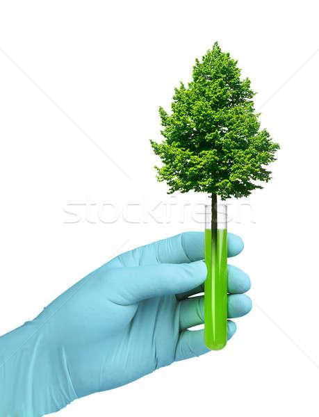 Büyüme biyoteknoloji deney tüpü biyoteknoloji ağaç büyüyen Stok fotoğraf © Anterovium