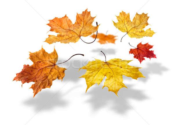 Foto stock: Colorido · outono · bordo · folhas · queda · branco