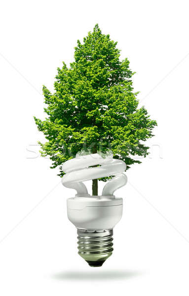 Eco lamp and tree Stock photo © Anterovium