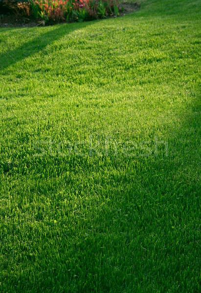 Hierba verde verde jardín césped hierba oscuridad Foto stock © Anterovium