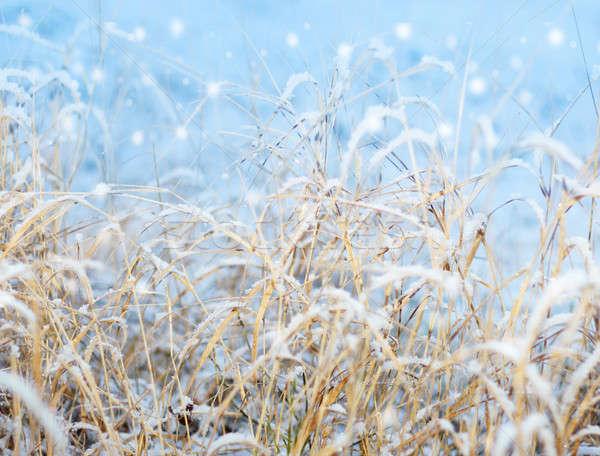 первый впечатление снега красивой зима Сток-фото © Anterovium