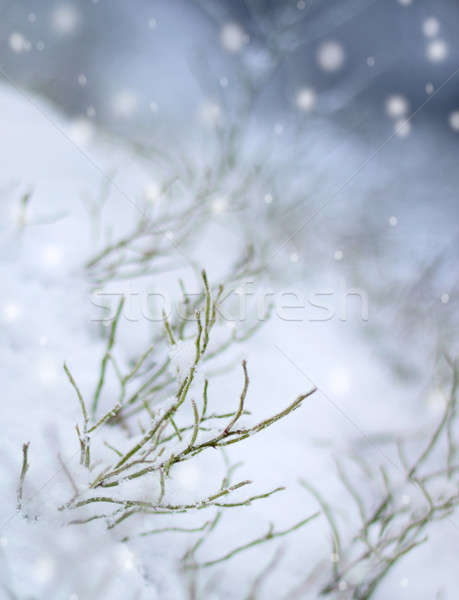 Erste Schneefall Eindruck Schnee schönen Winter Stock foto © Anterovium
