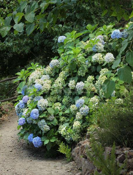Mavi park çiçekler bahçe arka plan Stok fotoğraf © Anterovium
