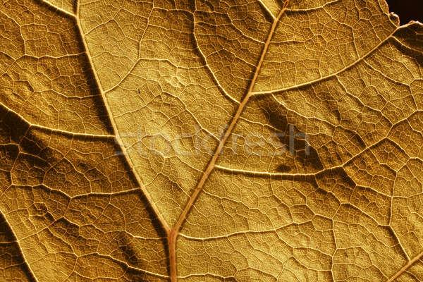 Najaar blad cel structuur aderen bruin Stockfoto © Anterovium