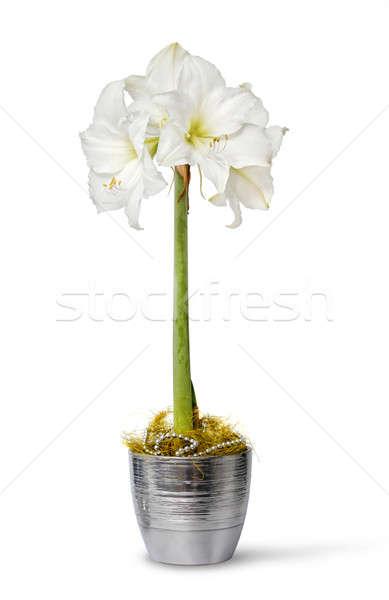 белый банка цветочный горшок изолированный цветок красоту Сток-фото © Anterovium