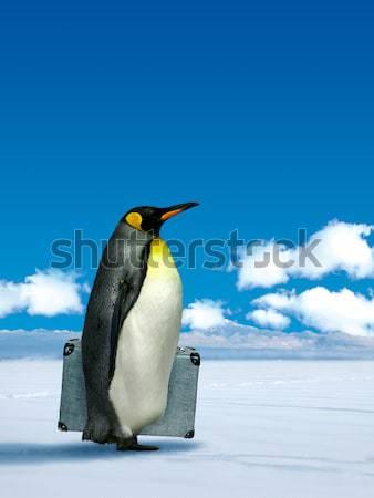 Penguin wondering grass Stock photo © Anterovium