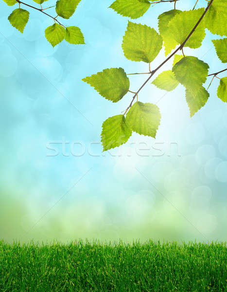Zöld fű tavasz fantázia nyírfa levelek puha Stock fotó © Anterovium