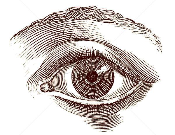 Emberi szem öreg vésés illusztráció nyitva Stock fotó © Anterovium