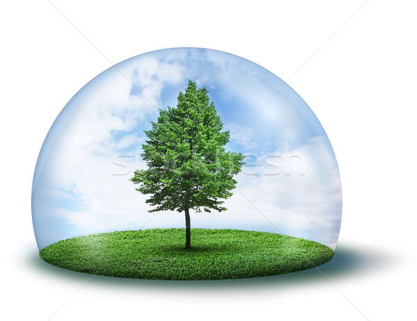 Lone green tree under protective dome Stock photo © Anterovium