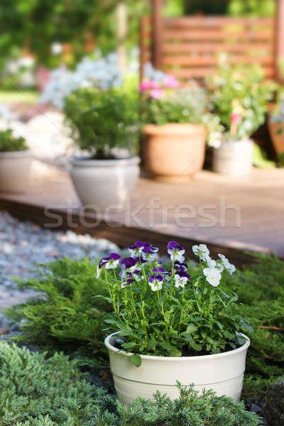 Zomer tuin patio terras bloem home Stockfoto © Anterovium