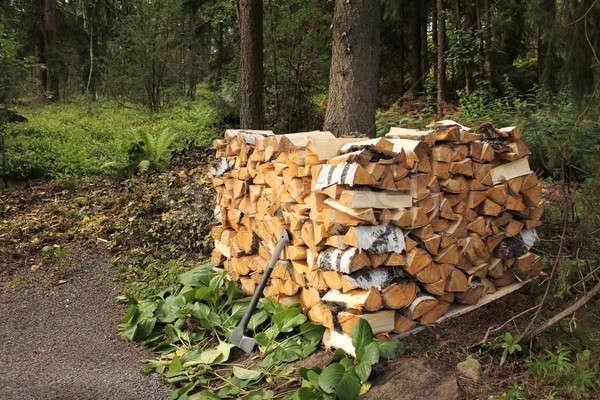 Brzozowy drewno opałowe lasu tle Zdjęcia stock © Anterovium