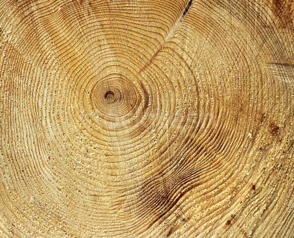 Annuale crescita anelli cerchio pattern albero Foto d'archivio © Anterovium