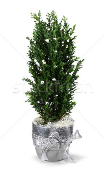 クリスマス サイプレス 装飾 銀 ポット 孤立した ストックフォト © Anterovium