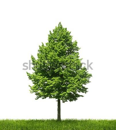 Zöld egyedüli fa fehér növekvő zöld fű Stock fotó © Anterovium