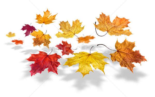 Foto stock: Outono · queda · colorido · bordo · folhas · voador
