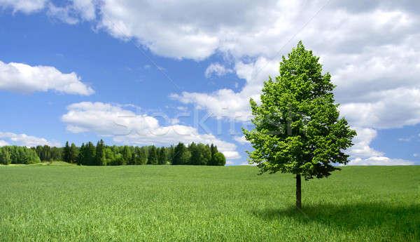 Lone tree on green field Stock photo © Anterovium