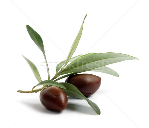 Fresh olive tree branch with olives Stock photo © Anterovium